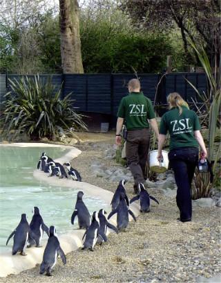 Лондонският Зоопарк